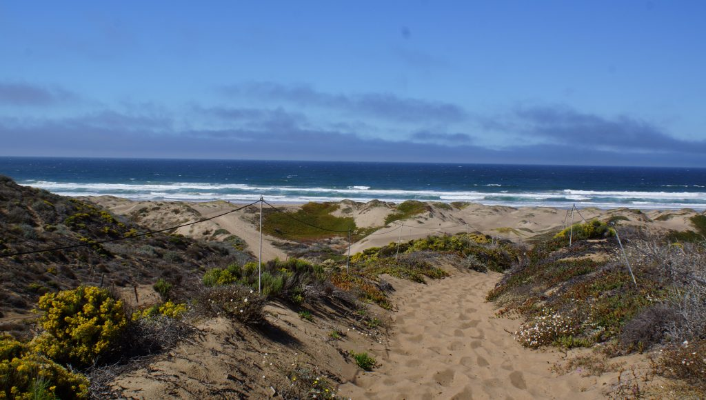 Morro Dunes Trail – Riding the SLO County Trails | SLO Horse News