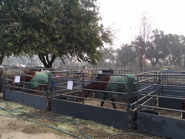 Assisting the People, Property and Pets Affected by the Camp Fire | SLO Horse News