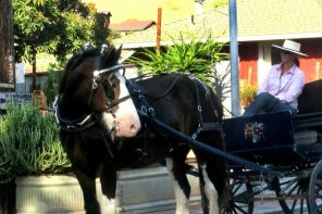 Slow Down and Enjoy a Carriage Ride at the Best of the West Antique Equipment Show