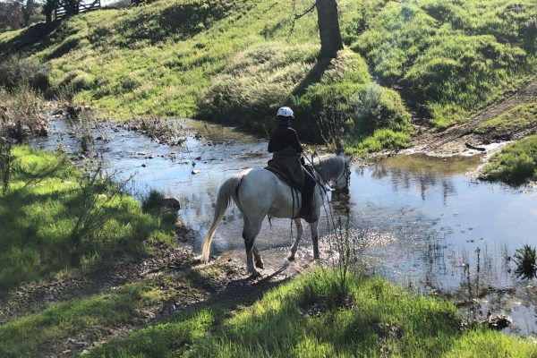 Learn How to Horseback Ride 25, 50 or 100 miles at the Get Ready for Distance Riding Clinic | SLO Horse News