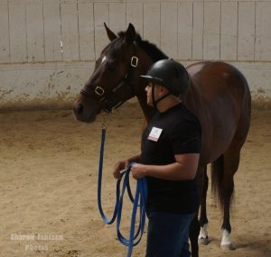 Horses Help Heal People Emotionally – Horse Sense & Healing  | SLO Horse News