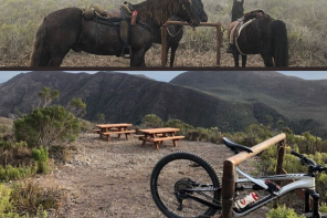 Pulling Together: Horses, Mules and People Put Up Picnic Tables