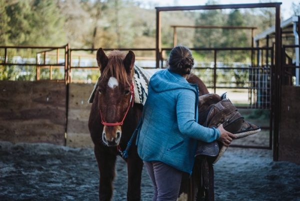 Bridging the Gap Between Potential Adopters and the American Mustang with Mustang Matt | SLO Horse News