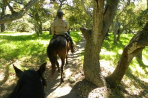 Horseback Riding is an Essential Activity
