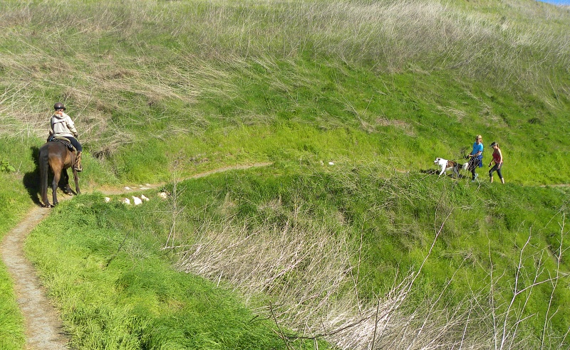 Three Ways Equestrians Can Make Sharing Multi-Use Trails Possible  | SLO Horse News