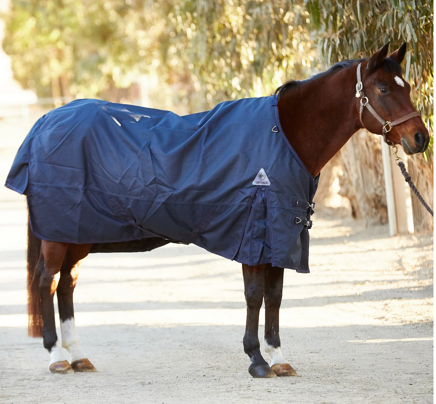 To Blanket, or not to Blanket? Managing Your Horse's Winter Blanket  | SLO Horse News