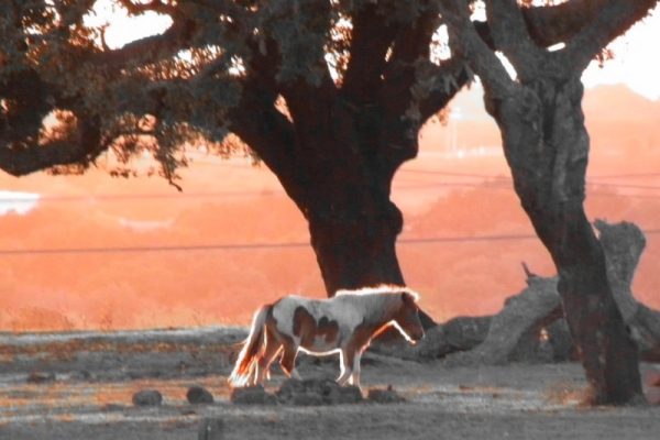 Compassionate Large Animal Carcass Removal Service in SLO County | SLO Horse News