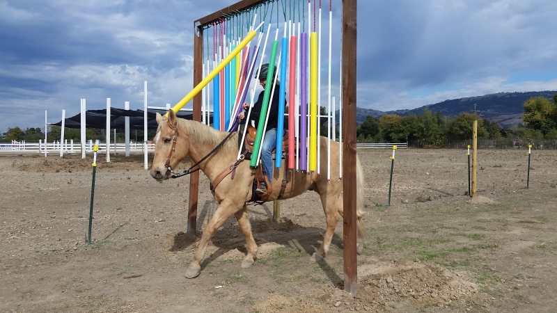 Join the Fun of a Memorial Trail Trial Honoring Fallen Mounted Police Personnel and Mounts | SLO Horse News