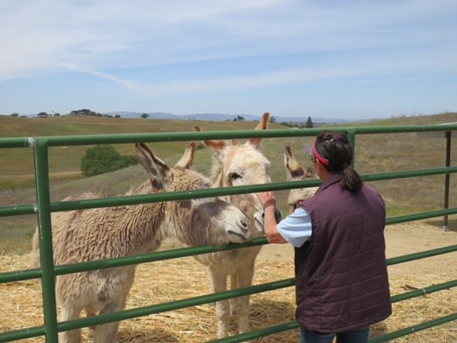 Volunteers are the Heart of Redwings Horse Sanctuary