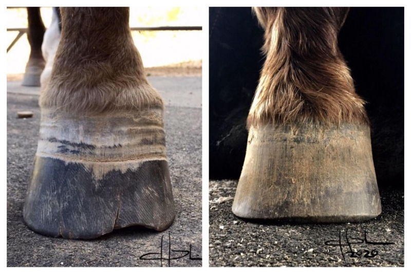 Hoof Building Clinic with David Landreville : Taking the Mystery out of Trimming    SLO Horse News