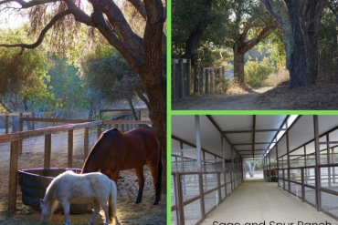 Sage and Spur Ranch Provides Custom Care for Your Horse