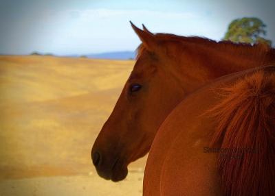 Enjoying Redwings Horse Sanctuary Residents